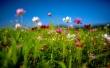 flower-field-summer