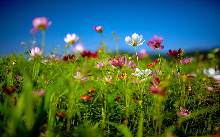 flower-field-summer